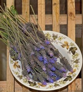 Lujos lavender (photo by Kenton Smith)