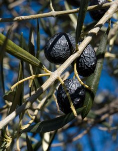 Casa Tyr olives