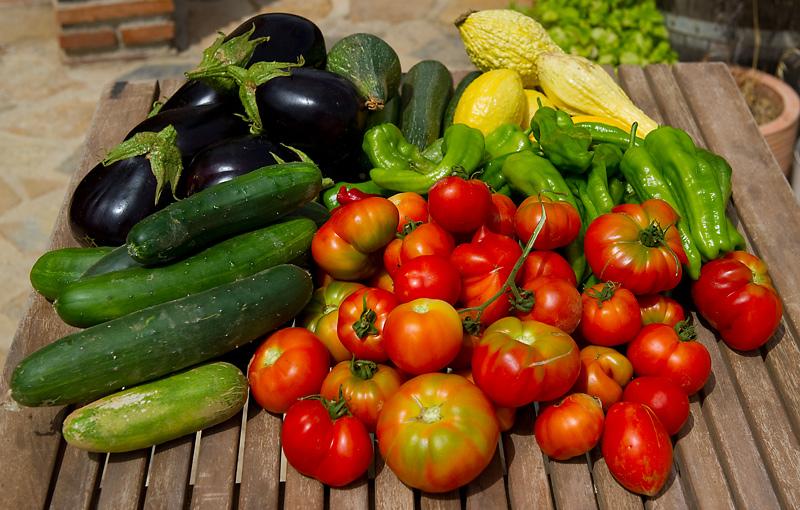 Veg harvest at Casa Tyr