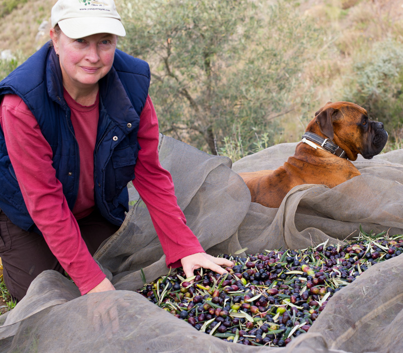 Ann even manages a smile on day 5 of olive picking!