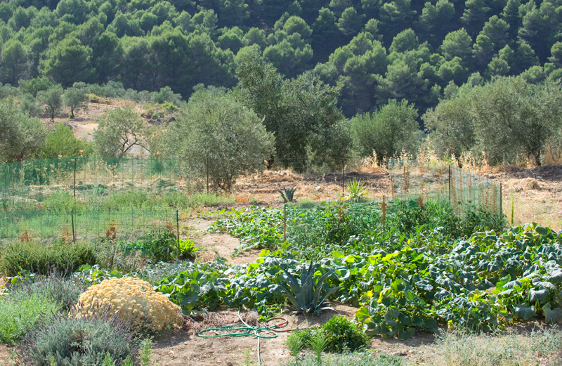 Top veggie garden, Casa Tyr