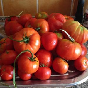 tomatoes 2015